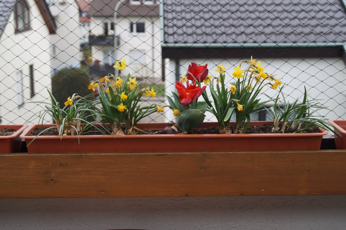 Spring flowers(!), and progress on my herb garden
